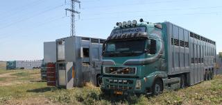 Cattle-cruiser1